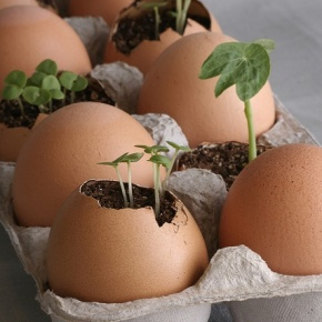 Kulit telur jangandibuang!