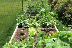 Urban Farming, mengapa tidak memulai di halamanrumah?