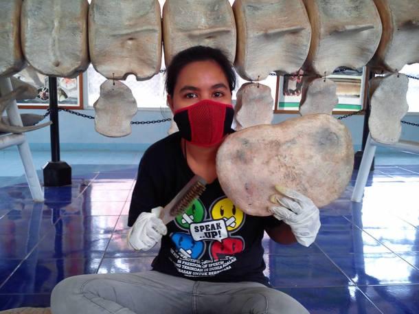 Petugas sedang membersihkan rangka paus dari coret-coretan pengunjung. [courtesy: Museum NTT]