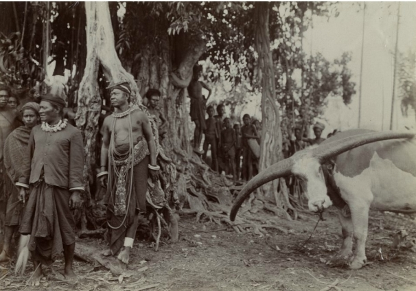 Raja Roga Ngole (Kiri depan) dari Nageh-Keo (Nagakeo) dan seekor kerbau yang akan dikorbankan dalam upacara adat di Boawae. Foto ini adalah koleksi G.P. Rouffaer, diambil sekitar tahun 1920. [Sumber: KITLV]