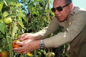 Inisiatif Biogas dan Pertanian Organik Merambah PetaniSumba